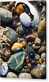 Rocks And Shells Acrylic Print by Charles Harden