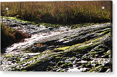 Rocks Moss And Grass 2  Acrylic Print by Lyle Crump