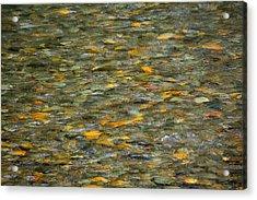 Rocks Under Water Acrylic Print