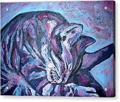 Rocky In Blue Acrylic Print by Sarah Crumpler