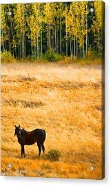 Rocky Mountain Autumn Graze Acrylic Print by James BO  Insogna
