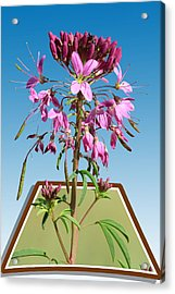 Rocky Mountain Bee Plant Acrylic Print