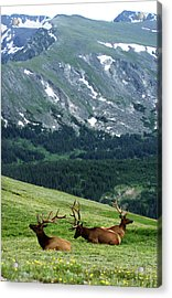 Acrylic Print featuring the photograph Rocky Mountain Elk 5 by Marie Leslie