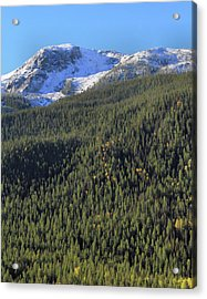 Acrylic Print featuring the photograph Rocky Mountain Evergreen Landscape by Dan Sproul