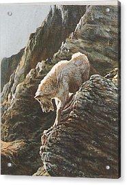 Rocky Mountain Goat Acrylic Print by Steve Greco