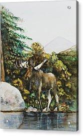Rocky Mountain Moose Acrylic Print
