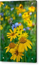 Acrylic Print featuring the photograph Rocky Mountain Wildflowers by Cascade Colors