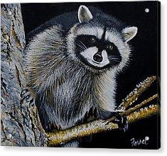 Rocky Raccoon Acrylic Print by Ferrel Cordle