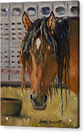 Rodeo Horse Acrylic Print by Lori Brackett