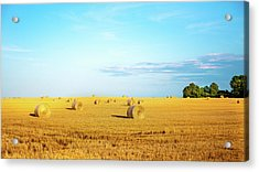 Acrylic Print featuring the photograph Rolled Hay by Onyonet  Photo Studios