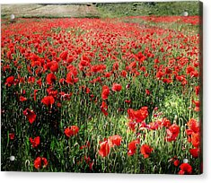 Rolling Fields With Poppies Acrylic Print by Dorothy Berry-Lound