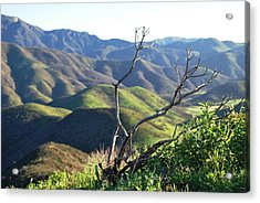 Acrylic Print featuring the photograph Rolling Green Hills With Dead Branches by Matt Harang