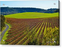 Rolling Hills And Vineyards Acrylic Print