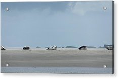 Acrylic Print featuring the photograph Rolling Seals by Marc Philippe Joly