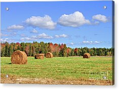 Rolls Of Hay On A Beautiful Day Acrylic Print