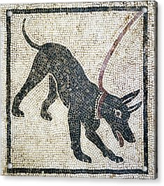 Roman Guard Dog Mosaic Acrylic Print by Sheila Terry
