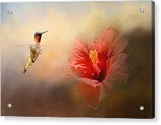 Romancing The Hibiscus Acrylic Print