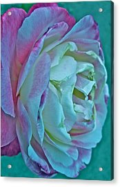 Romancing The Restless Acrylic Print by Gwyn Newcombe