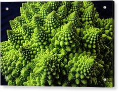 Romanesco Broccoli Acrylic Print