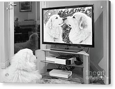 Romantic Dogs Acrylic Print