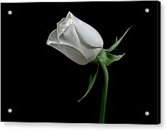 Romantic Rose Acrylic Print by Elsa Marie Santoro