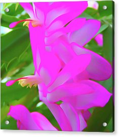 Acrylic Print featuring the photograph Romantic Skies Christmas Cactus Flower by Aimee L Maher Photography and Art Visit ALMGallerydotcom