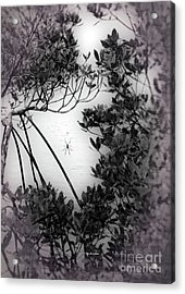 Acrylic Print featuring the photograph Romantic Spider by Megan Dirsa-DuBois