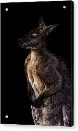 Roo Acrylic Print by Martin Newman