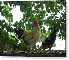 Rooftop Roosters Acrylic Print