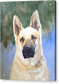 Rookie Acrylic Print by Marilyn Jacobson