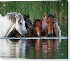 Room For All Acrylic Print by Sue Cullumber