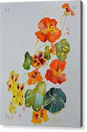 Room To Move Acrylic Print by Beverley Harper Tinsley