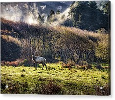 Acrylic Print featuring the photograph Roosevelt Elk by Leland D Howard