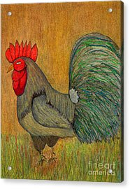 Rooster Feathers Acrylic Print