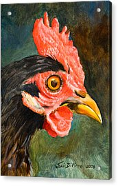 Rooster Acrylic Print by Joni Dipirro