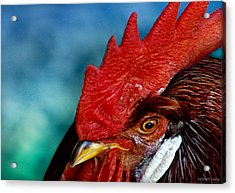Rooster Acrylic Print by Robert Lacy