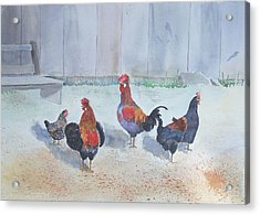 Roosters Acrylic Print by Christine Lathrop