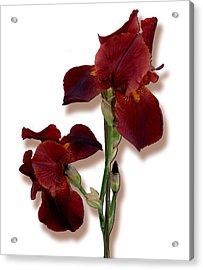Root Beer Irises Acrylic Print by Tara Hutton