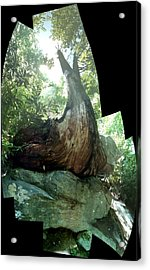 Root Over Rock Acrylic Print
