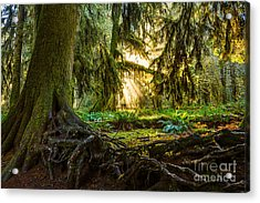 Roots And Light Acrylic Print