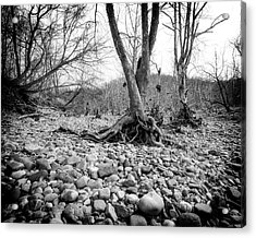 Acrylic Print featuring the photograph Roots And Stones by Alan Raasch