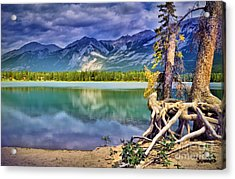Roots And Reflections Acrylic Print