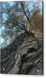 Roots Acrylic Print by Brigid Nelson