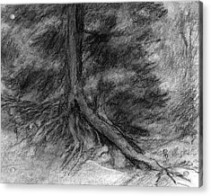 Roots I Acrylic Print