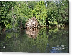 Roots In The Stream Acrylic Print by Deborah MacQuarrie-Selib