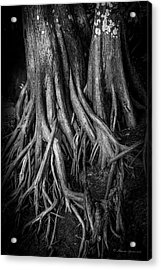 Roots Acrylic Print by Marvin Spates