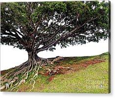 Roots Of Honolulu Acrylic Print by Gina Savage