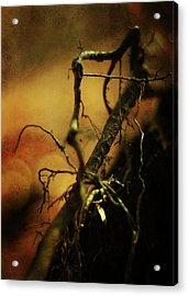 Roots Of Life Acrylic Print by Rebecca Sherman