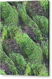 Roots Of The Ages Acrylic Print by Tim Allen