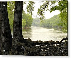 Roots On The Mississippi Acrylic Print by Jim Hughes